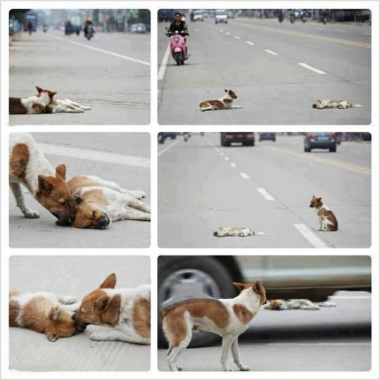 Psi smutek