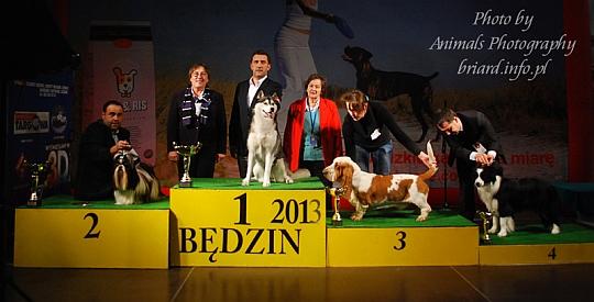 Best In Show Będzin 2013