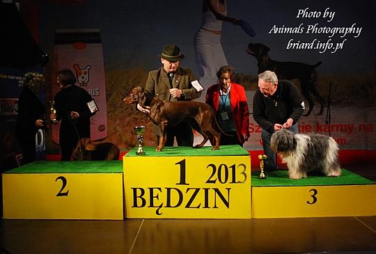Najpiękniejszy Pies Rasy Polskiej - Będzin 2013