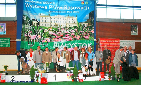 Międzynarodowa Wystawa Psów - Białystok