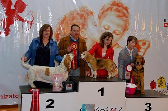 Walentynkowa Wystawa Psów Rasowych - Bydgoszcz, 9-10.02.2013