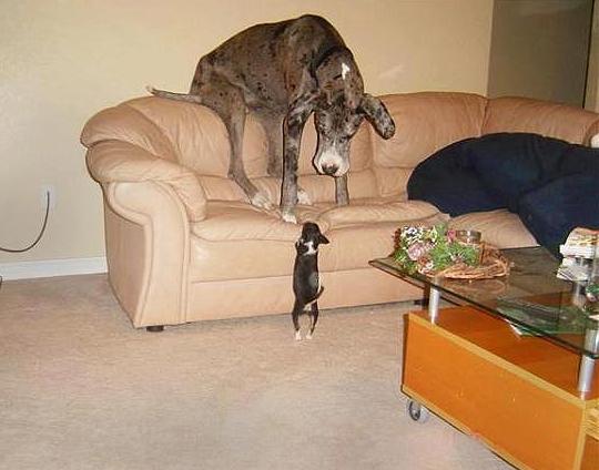 irracjonalny psi strach