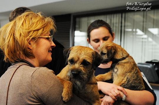 Wystawa Psów Katowice 2013 - Border Terrier