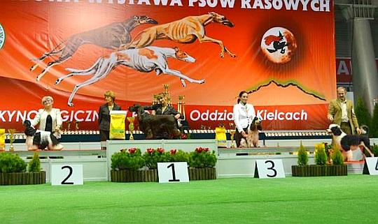 Międzynarodowa Wystawa Psów Rasowych w Kielcach 2013