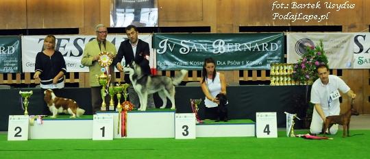 BEST IN SHOW Kraków 2013