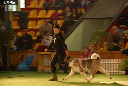 Wystawa Championów - Champion of Champions - Leszno, 24.02.2013