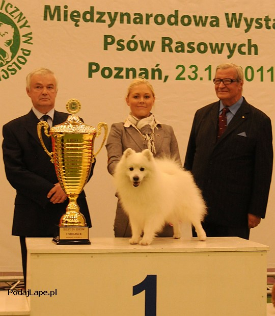 Best In Show - Poznań 2011