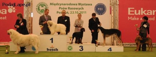 Najpiękniejszy Pies Rasy Polskiej