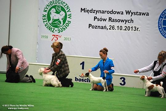 Międzynarodowa Wystawa Psów <br /> <br /> Rasowych - Poznań, 26,27 październik 2013