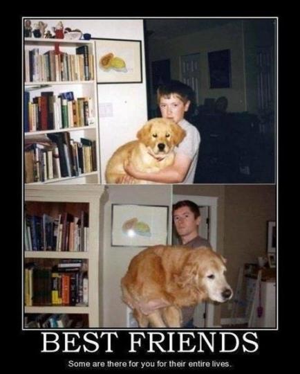 przyjaźń z psem