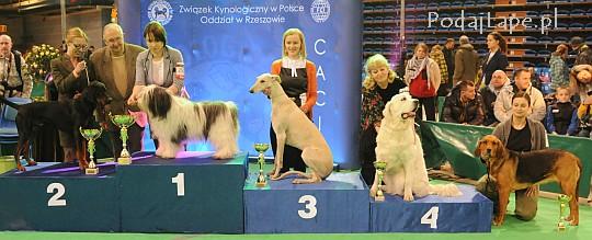 Najpiękniejszy Pies Ras Polskich