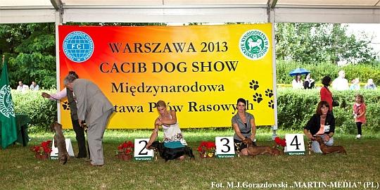 MIĘDZYNARODOWA WYSTAWA PSÓW RASOWYCH w Warszawie 2013