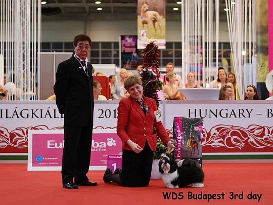 WORLD DOG SHOW - Światowa Wystawa Psów - Budapeszt 2013 - Najpiękniejsze baby