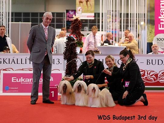 WORLD DOG SHOW - Światowa Wystawa Psów - Budapeszt 2013 - Najpiękniejsza grupa hodowlana