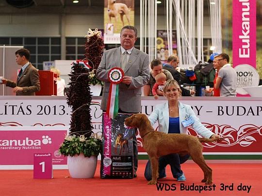 WORLD DOG SHOW - Światowa Wystawa Psów - Budapeszt 2013 - Najpiękniejszy junior dnia 18.05.2013