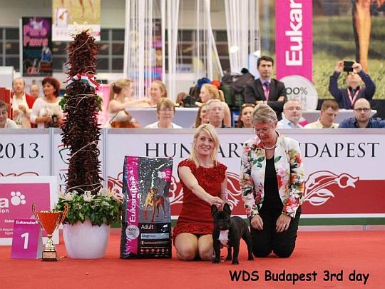 WORLD DOG SHOW - Światowa Wystawa Psów - Budapeszt 2013 - Najpiękniejsze szczenie