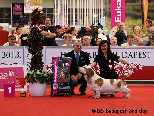 WORLD DOG SHOW - Światowa Wystawa Psów - Budapeszt 2013 - Najpiękniejszy Weteran
