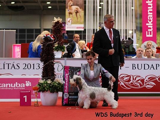 WORLD DOG SHOW - Światowa Wystawa Psów - Budapeszt 2013 - Zwycięzca grupy VI - juniory