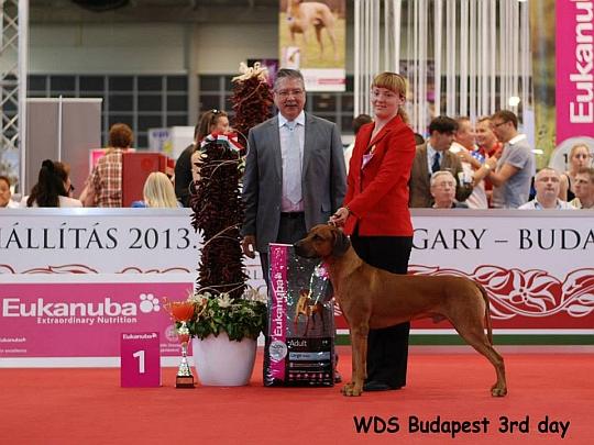 WORLD DOG SHOW - Światowa Wystawa Psów - Budapeszt 2013 - Zwycięzca grupy VI