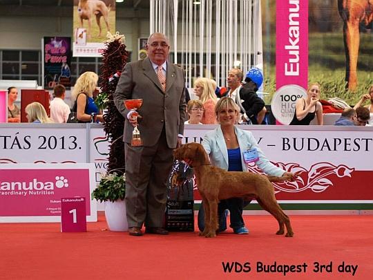 WORLD DOG SHOW - Światowa Wystawa Psów - Budapeszt 2013 - Zwycięzca grupy VII -juniory