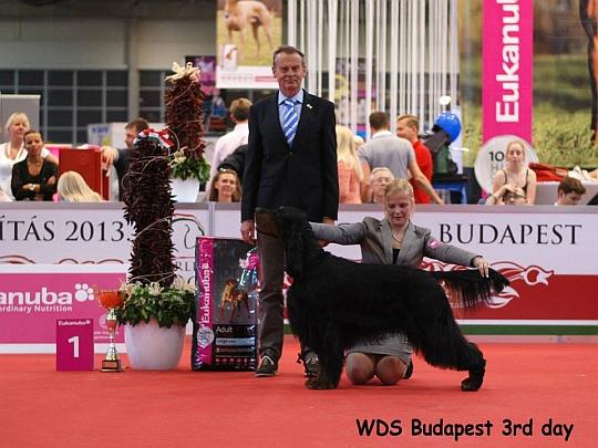 WORLD DOG SHOW - Światowa Wystawa Psów - Budapeszt 2013 - Zwycięzca grupy VII