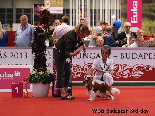 WORLD DOG SHOW - Światowa Wystawa Psów - Budapeszt 2013 - Zwycięzca grupy IX -juniory