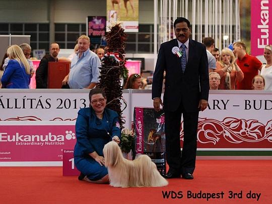 WORLD DOG SHOW - Światowa Wystawa Psów - Budapeszt 2013