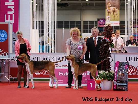 WORLD DOG SHOW - Światowa Wystawa Psów - Budapeszt 2013 - Najpiękniejsza para psów