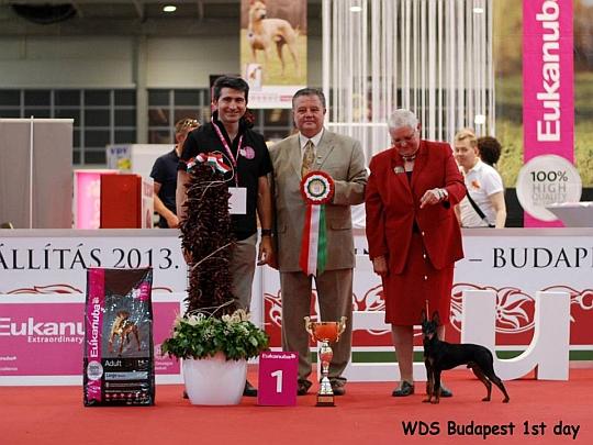 WORLD DOG SHOW - Światowa Wystawa Psów - Budapeszt 2013 - Najpiękniejszy junior dnia 16.05.2013
