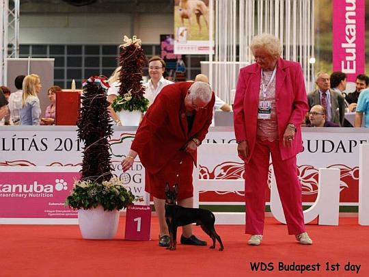 WORLD DOG SHOW - Światowa Wystawa Psów - Budapeszt 2013 - Zwycięzca grupy III - juniory