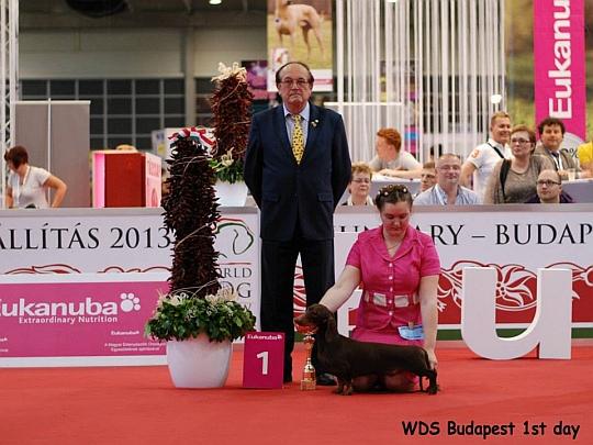 WORLD DOG SHOW - Światowa Wystawa Psów - Budapeszt 2013 - Zwycięzca grupy IV -juniory