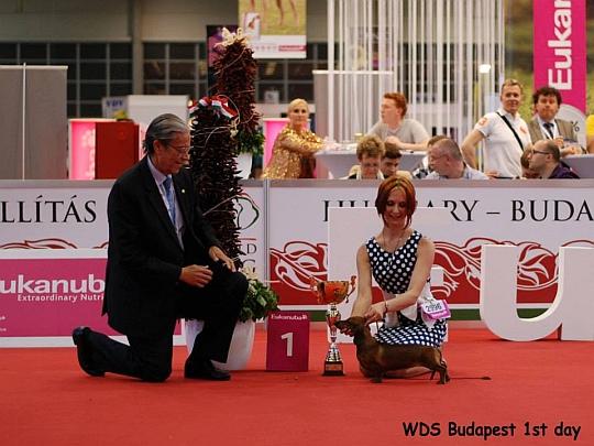 WORLD DOG SHOW - Światowa Wystawa Psów - Budapeszt 2013 - Zwycięzca grupy IV