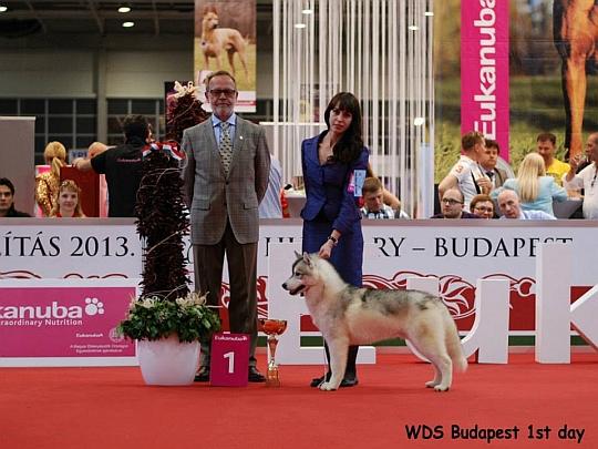 WORLD DOG SHOW - Światowa Wystawa Psów - Budapeszt 2013 - Zwycięzca grupy V -juniory