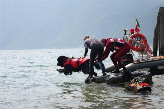 Międzynarodowe szkolenie psów w ratownictwie wodnym