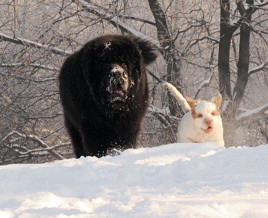 Zima z psem